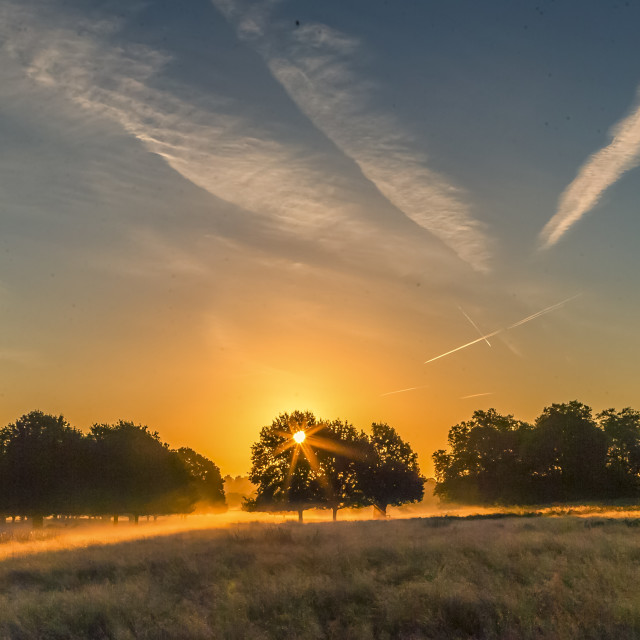 """Sunrise Over Richmond Park"" stock image"