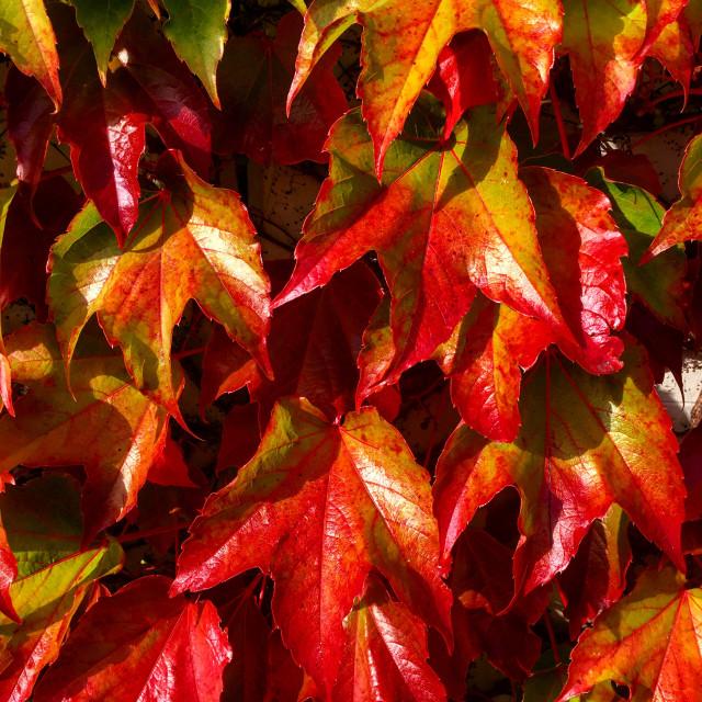 """Herbst"" stock image"