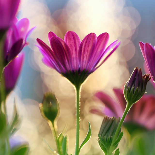 """""""Flowers from my garden"""" stock image"""