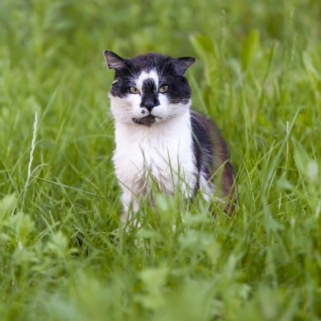 """Summer cat"" stock image"