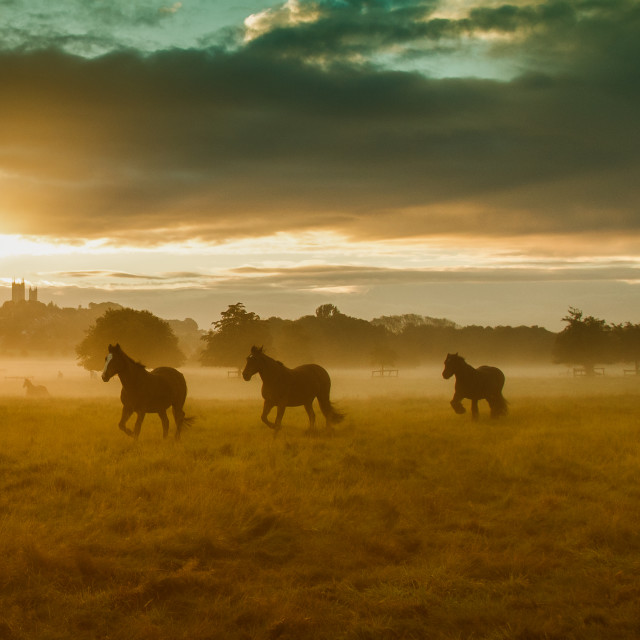 """Wild horses, Lincoln"" stock image"