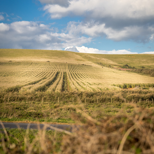 """""""Field on the Isle of Wight"""" stock image"""