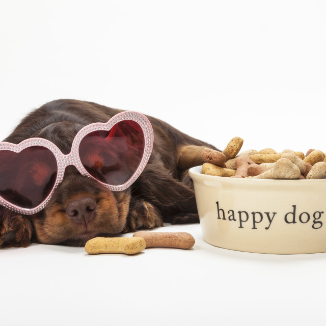 """""""Spaniel Puppy Dog Heart Shaped Glasses by Bowl of Biscuits"""" stock image"""
