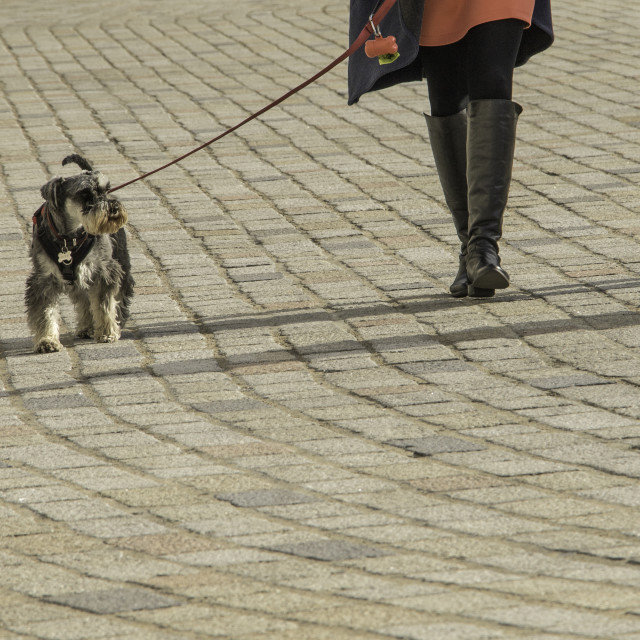 """Walking the dog"" stock image"