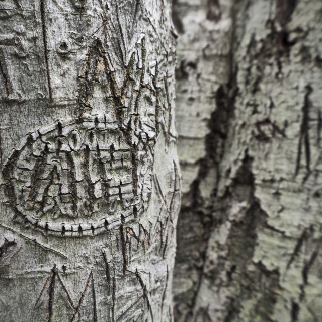 """Carved Tree"" stock image"