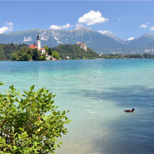 """Castle and Church of Bled"" stock image"