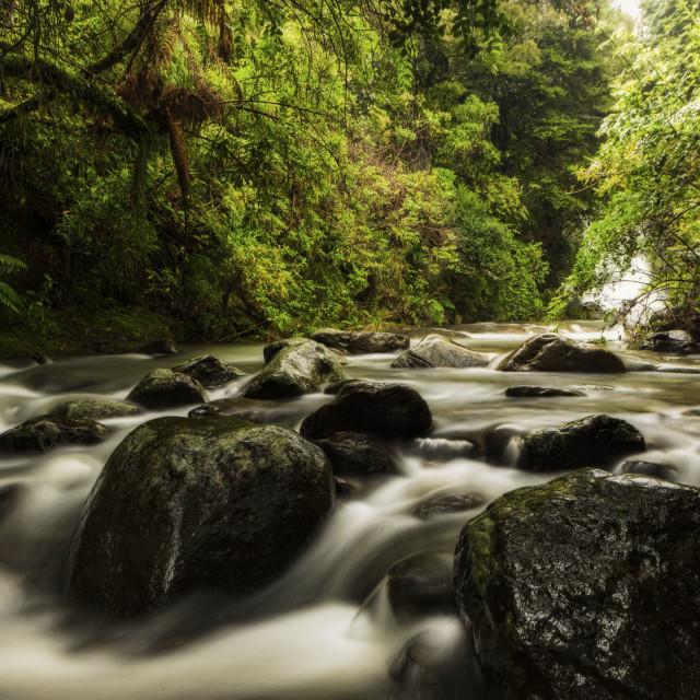"""Waiua River"" stock image"