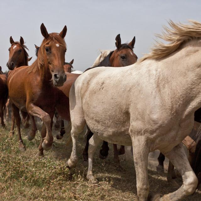 """Wild Herd"" stock image"