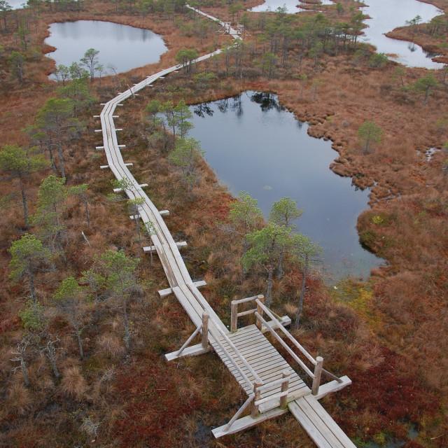 """Ķemeri National Park, Latvia"" stock image"