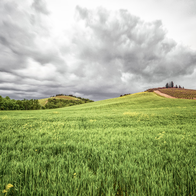 """""""Country landscape"""" stock image"""