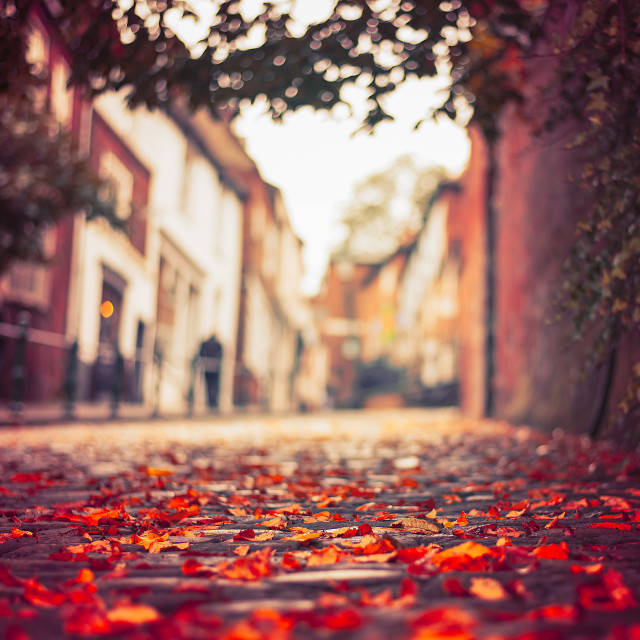 """Autmn leaves, Steep Hill, Lincoln"" stock image"