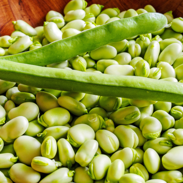 """""""Broad Beans 2"""" stock image"""