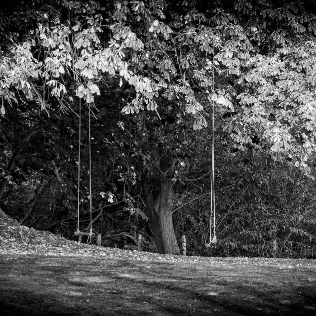 """Tree Swings"" stock image"