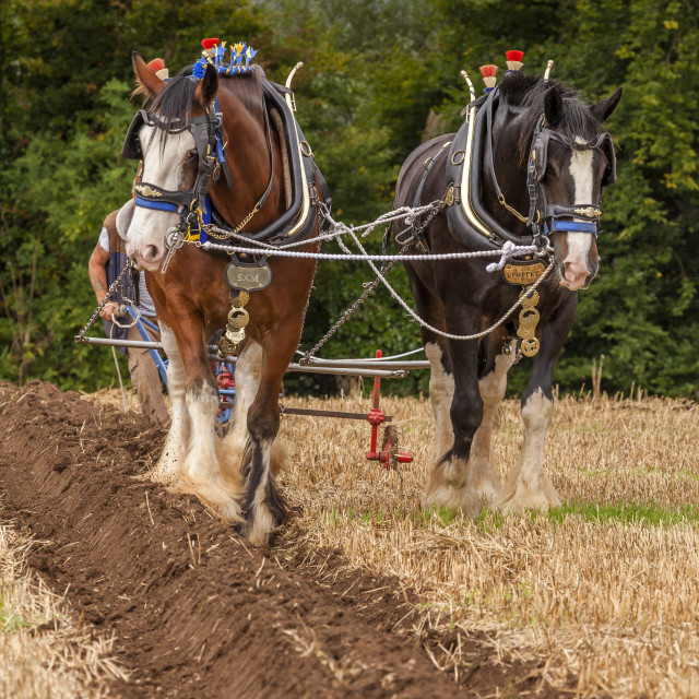"""""""PLOUGHING MATCH"""" stock image"""