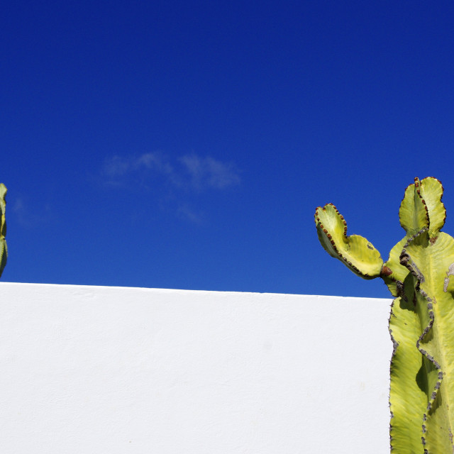 """Cacti and Sky"" stock image"