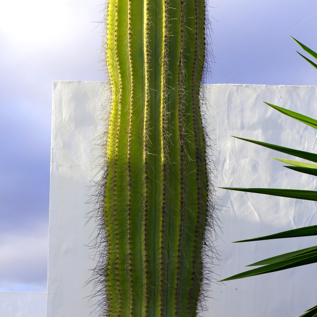 """Cacti and Sky, Marina Rubicon"" stock image"
