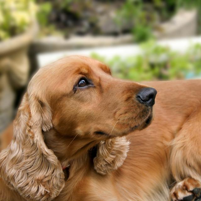 """""""Pet Dog"""" stock image"""