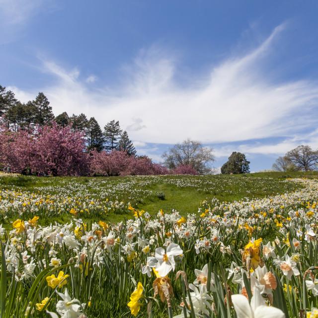"""""""Spring in New York"""" stock image"""