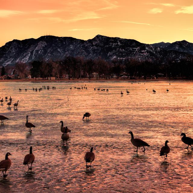 """Ducks on a Pond"" stock image"