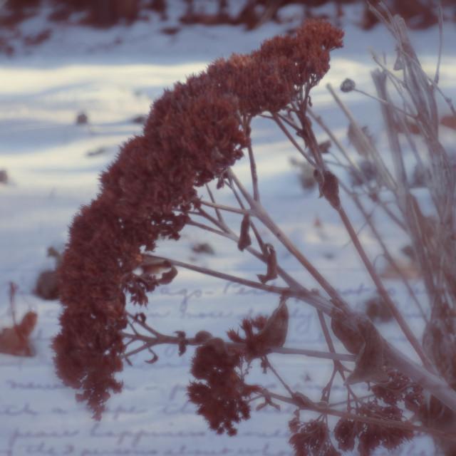 """Winter Journal"" stock image"