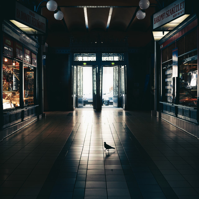 """Lone pigeon shopper"" stock image"