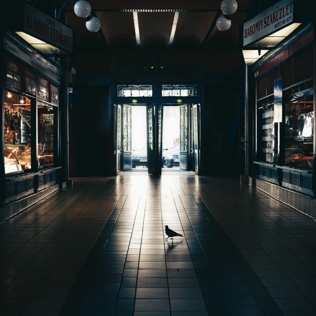 """Lone pigeon shopper"" stock image"