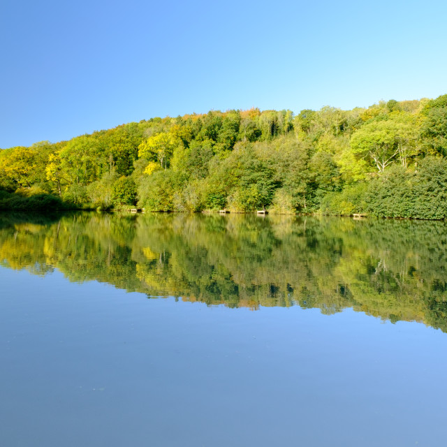 """Trees reflected in calm water"" stock image"
