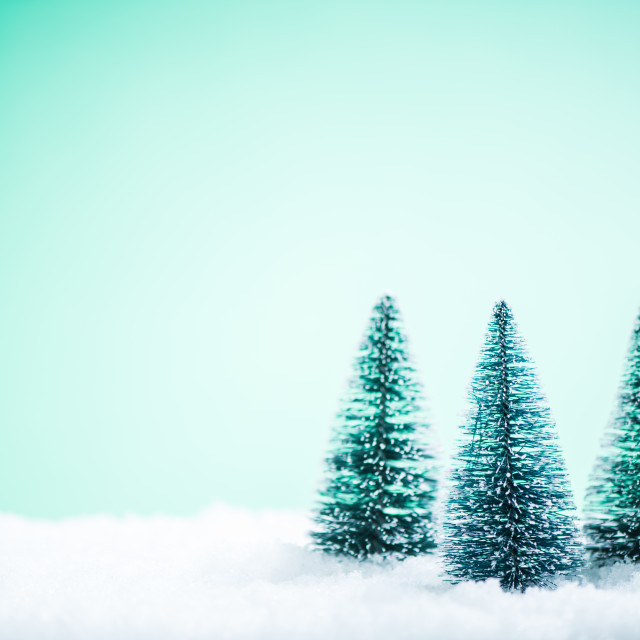 """Christmas trees in snow"" stock image"