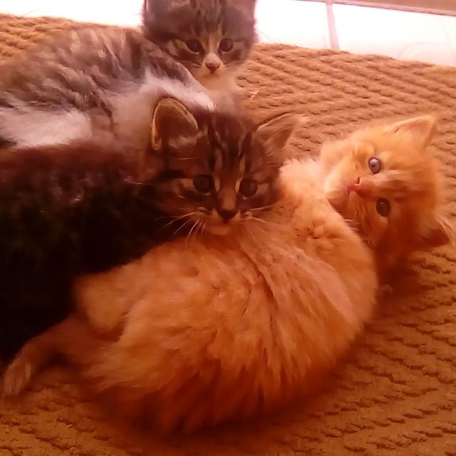 """""""Kittens"""" stock image"""