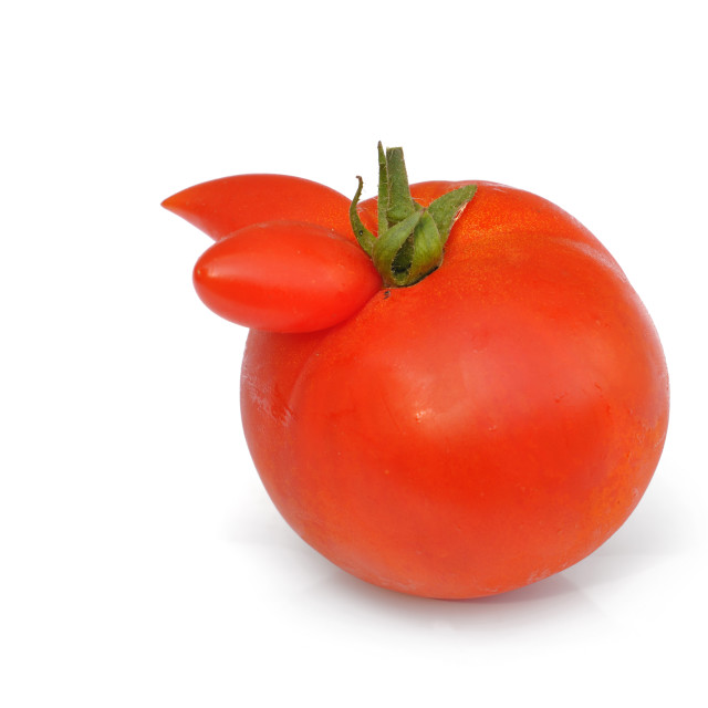 """weird tomato"" stock image"