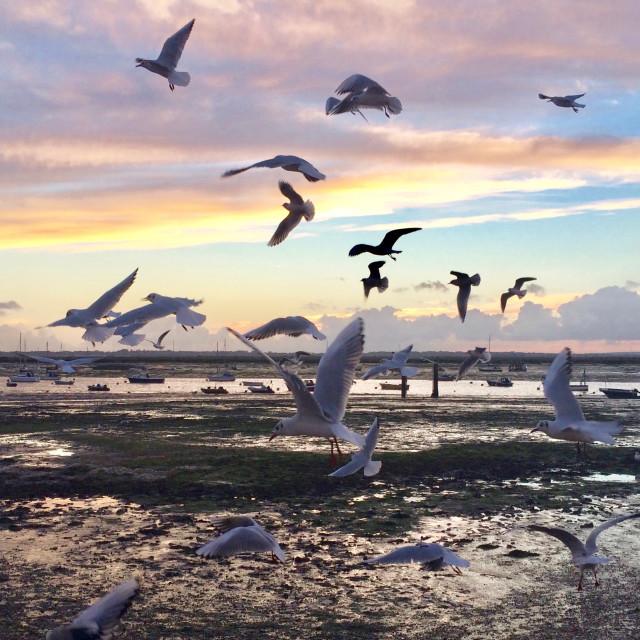 """Seagulls at Sunset"" stock image"