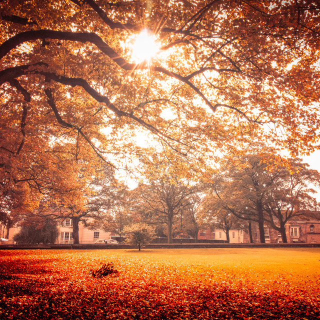 """Autumn Garden, Lincoln Cathedral"" stock image"