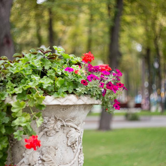 """Street flowerpot"" stock image"