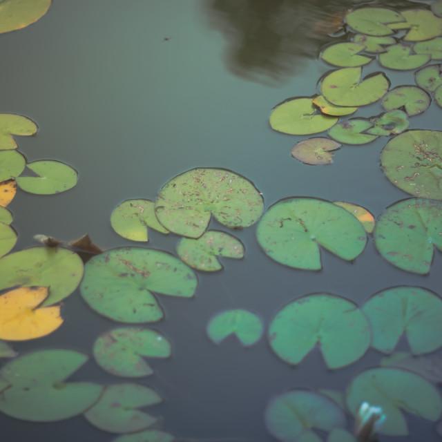"""Autumn pond"" stock image"