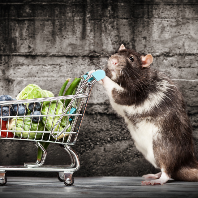"""""""Cute rat with a shopping cart"""" stock image"""