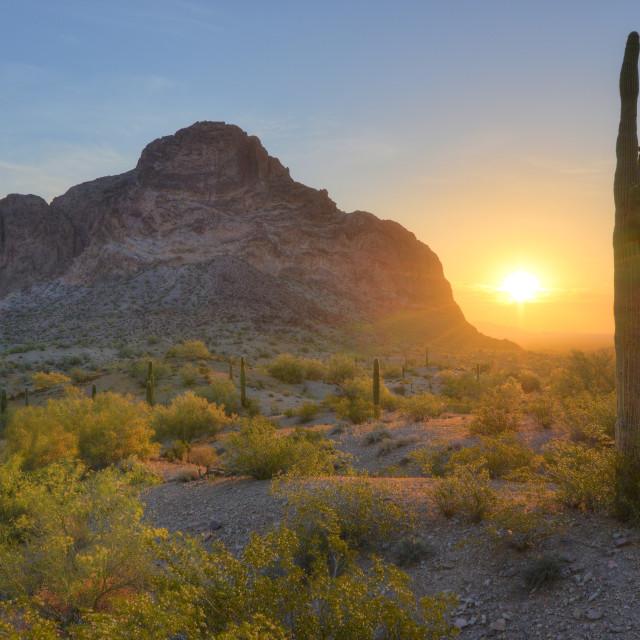 """""""Springtime Sunrise in the Desert"""" stock image"""