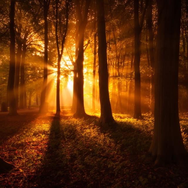 """Magic Morning"" stock image"