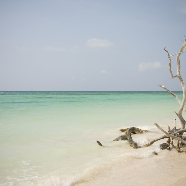 """Beach in Cuba"" stock image"