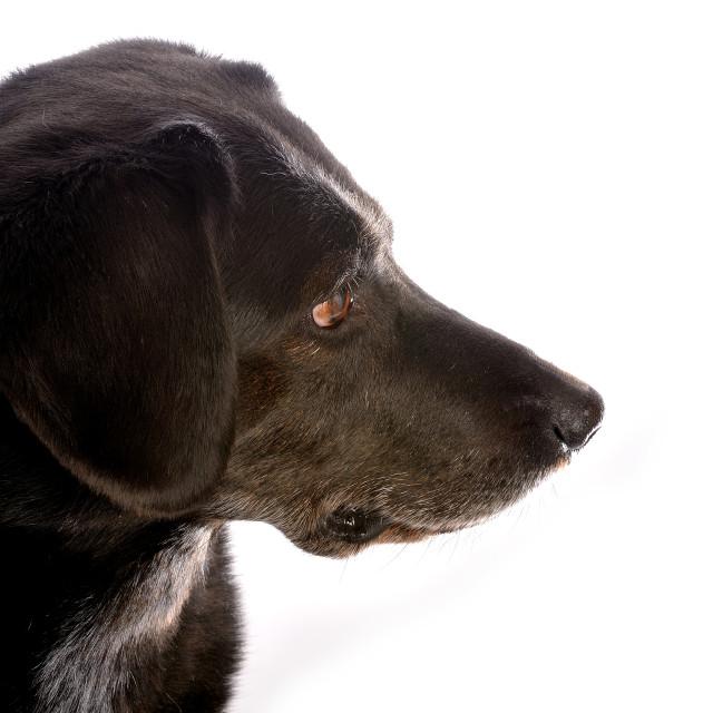 """""""Dog Portrait High Key #2"""" stock image"""