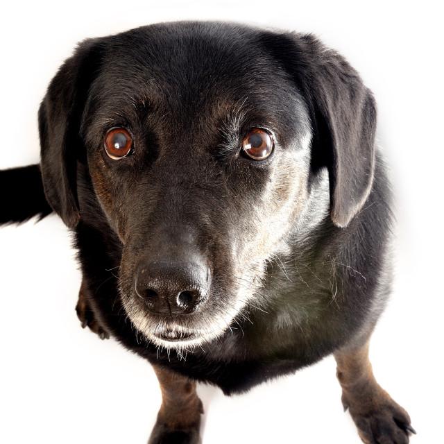 """""""Dog Portrait High Key #1"""" stock image"""