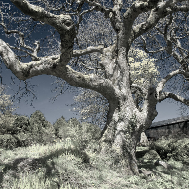 """Twisted tree 1"" stock image"