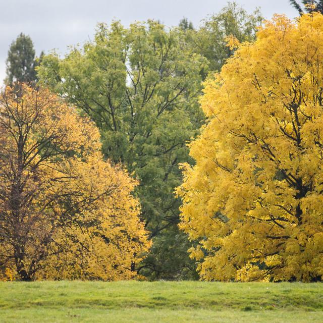 """Autumn Change"" stock image"