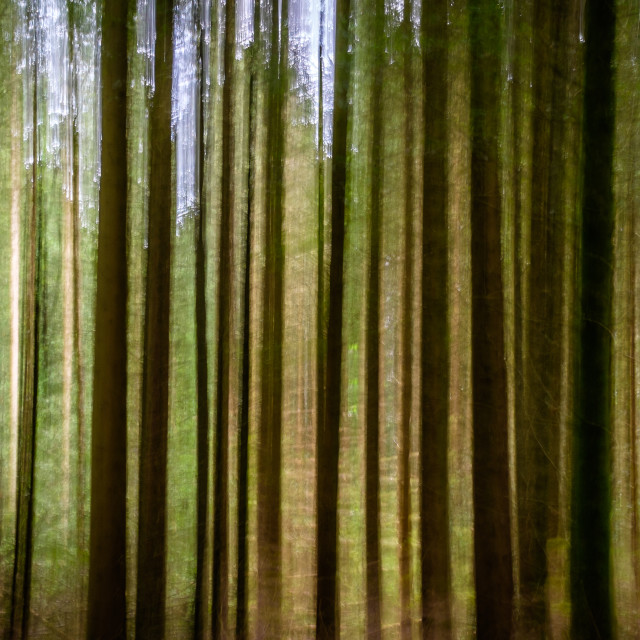 """Abstract Cumbrian Forest"" stock image"