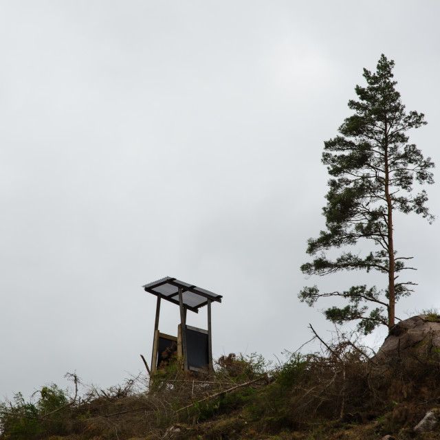 """""""Hunting tower by a single pine tree"""" stock image"""