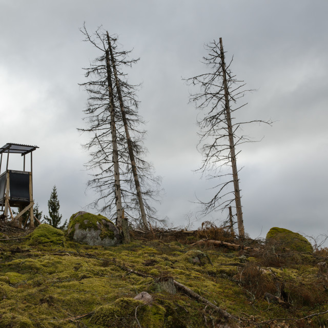 """""""Hunting tower on a forest hill"""" stock image"""