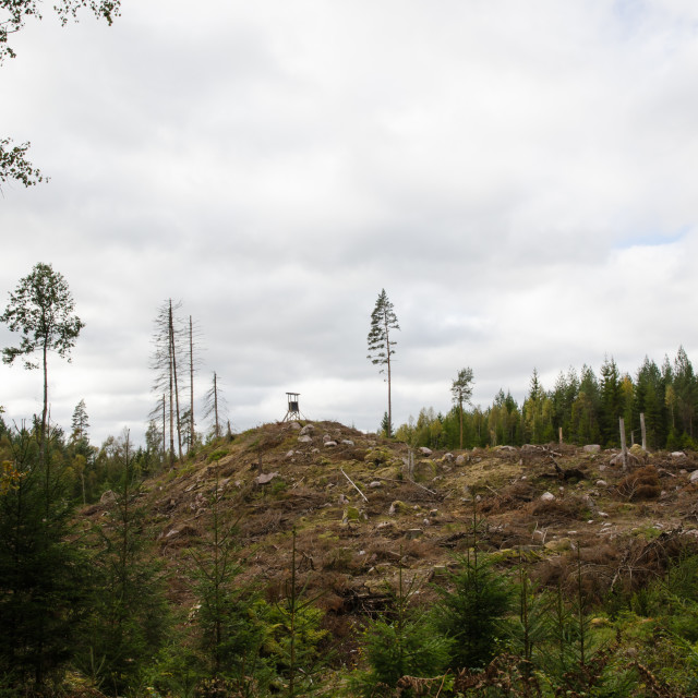 """""""Clear cut forest area"""" stock image"""
