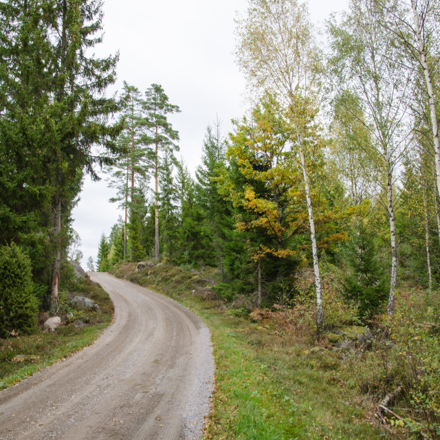 """""""Winding gravel road in the woods"""" stock image"""