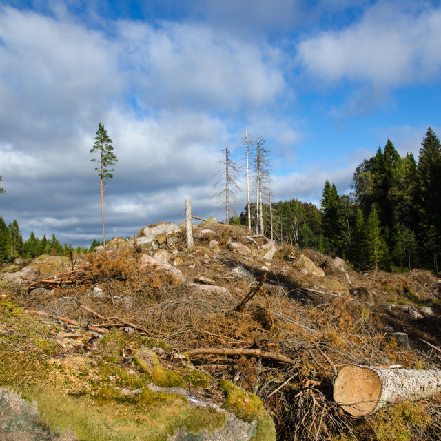 """""""Newly clear cut forest area"""" stock image"""
