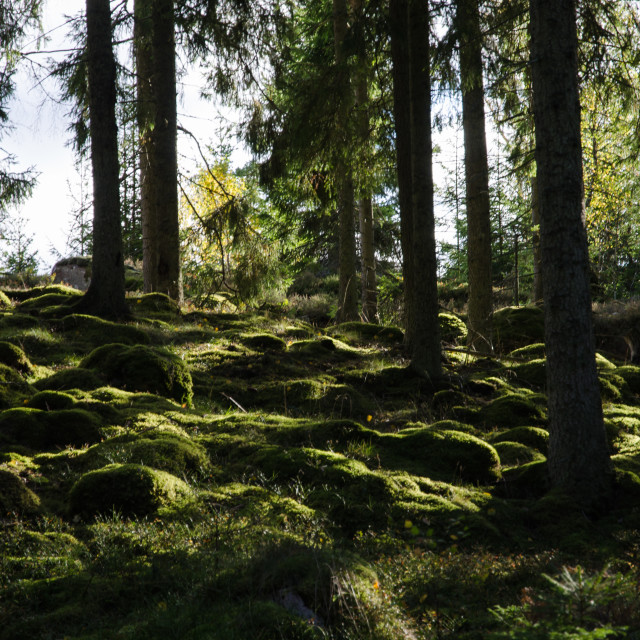 """Backlit mossy forest ground"" stock image"