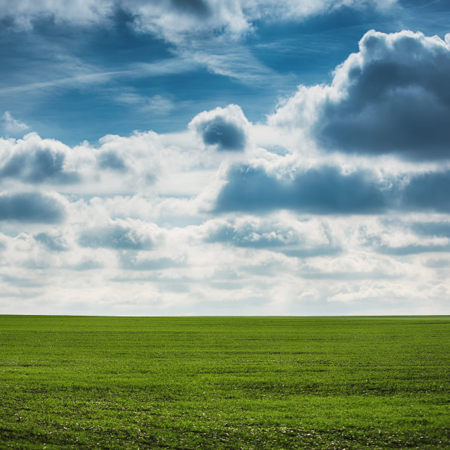 """Green wheat field and cloudy day"" stock image"